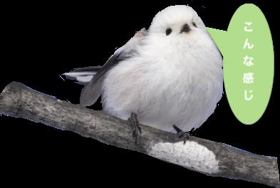 透過された鳥